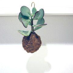 Planteplanet # 8 – Stilleben