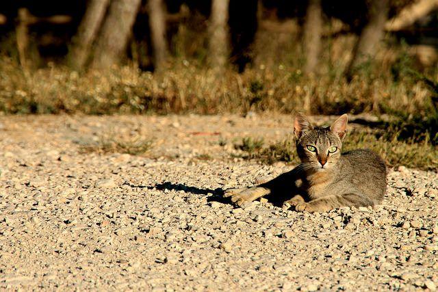 En estado de alerta felina. by sergioski1982 #Cats #Gatos #FotoGatetes