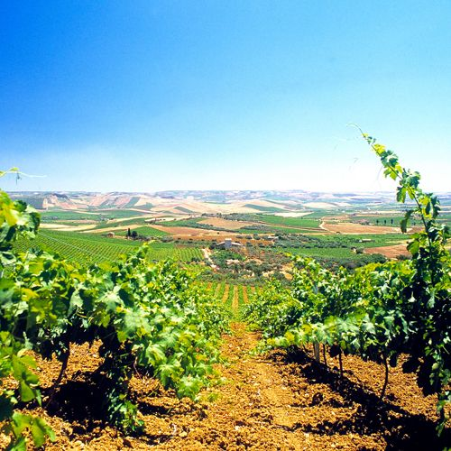 Earlier this month, Pantone announced Marsala—a rich red-brown hue—as their Color of the Year, but we much prefer Marsala's namesake destination, a wine region near Sicily known for its sweet vintage. | Via Travel + Leisure