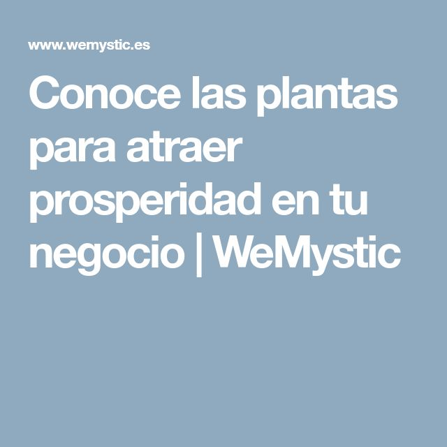 Conoce las plantas para atraer prosperidad en tu negocio | WeMystic
