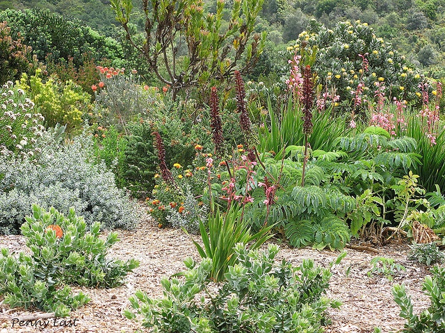 """""""Mixed Bed"""" Kirstenbosch Botanical Gardens, Cape Town, South Africa Photo by Penny East"""