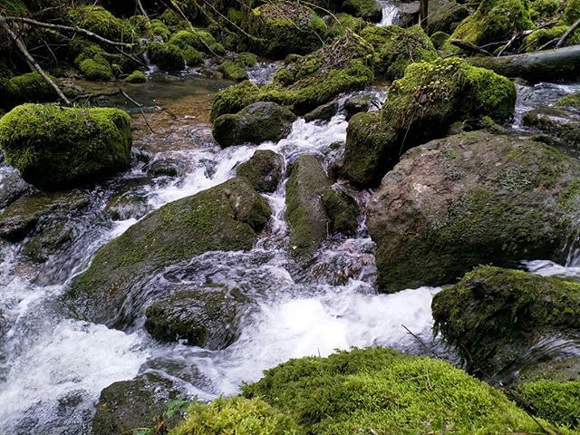Ich liebe dieses Farben- und Materialspiel: Moos Stein und Wasser :-) #Naturmomente #Schwarzbubenland #Solothurn #Nunningen #Schweiz  #photooftheday #magicplaces #kraftorte #switzerland #switzerlandpictures #magicswitzerland  #nature #naturelovers #forest #winter