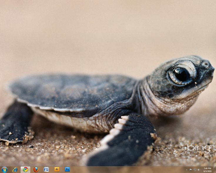 baby sea turtle - Yahoo! Search Results