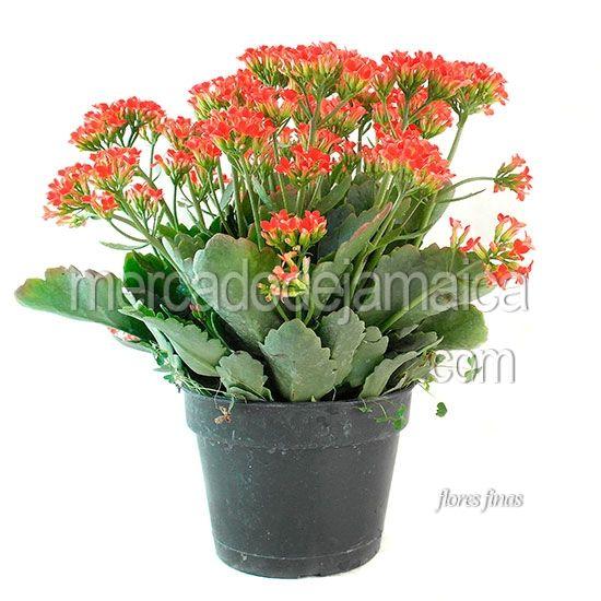 Mejores 10 im genes de plantas de ornato en pinterest for 10 plantas de ornato