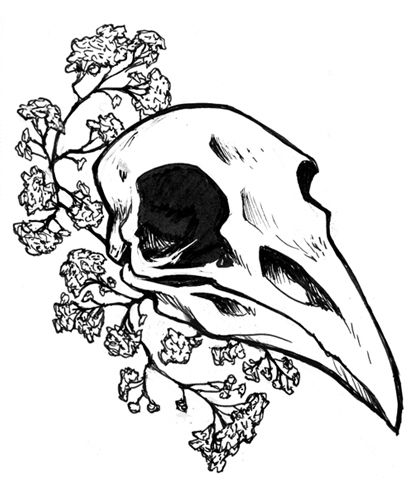 tumblr drawings raven skull - Google Search