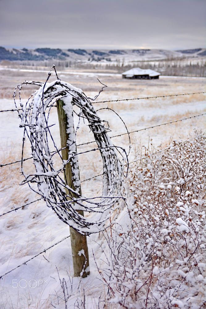 ***Winter at Glenbow Ranch (southern Alberta) by Frank King on 500px