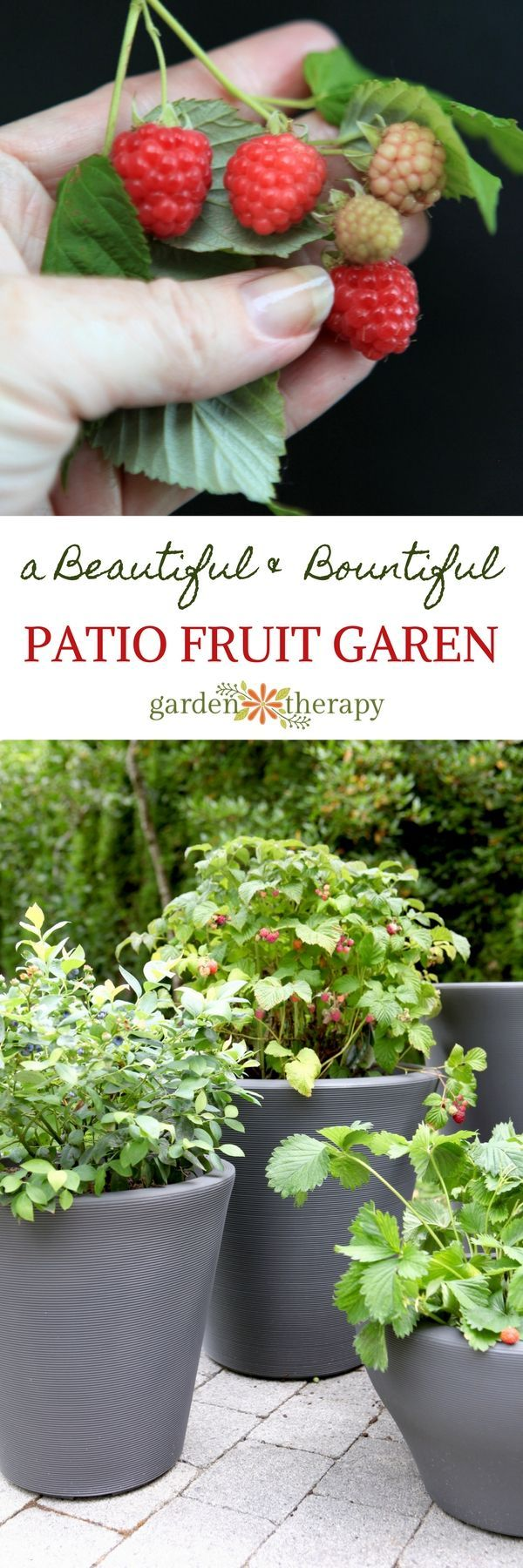 Patio Fruit -Sweet Edibles You Can Grow as a Container Garden. There have been some exciting new fruit plants developed that match aesthetics with function, which means you can get luscious fruit from a plant that's as gorgeous as it is useful. Raspberries, blackberries, blueberries, strawberries, and even fruit trees can sweeten up a small space. With these pretty plants and stylish containers, you can have a patio fruit garden that's not only yummy, but decorative too.