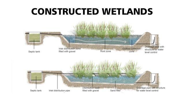 Constructed Wetlands Water Harvesting Pinterest