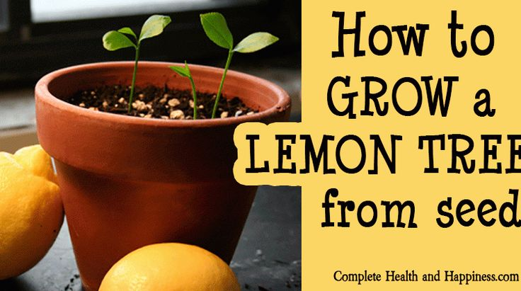 143 best images about interests on pinterest for Can i grow a lemon tree from lemon seeds