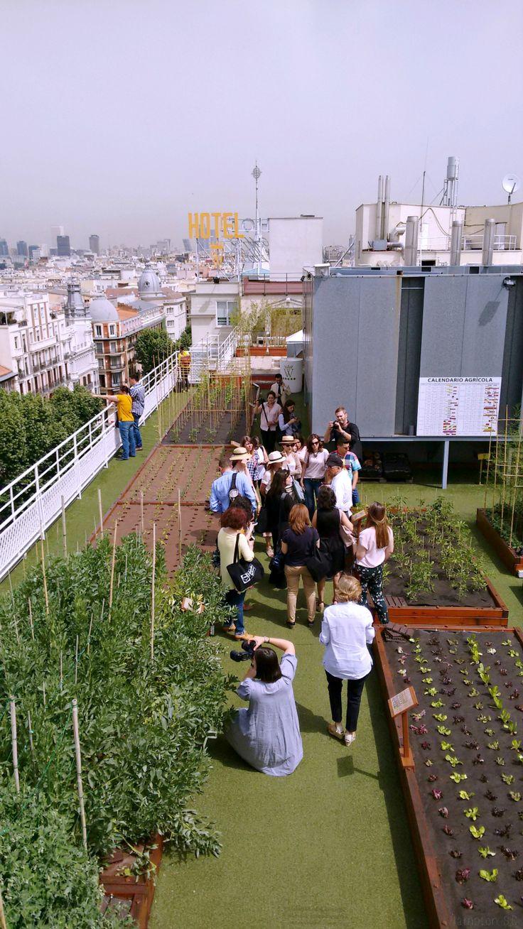 Huerto urbano patios terrazas balcones jardines y for Huerto y jardin