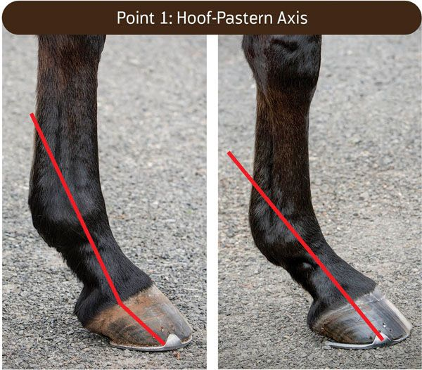 Your horse's feet have a story to tell. Learn to read between the lines and determine whether that story's telling you 'I'm OK' or 'Help me now!'