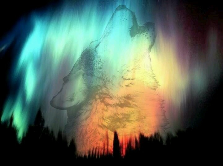 real northern lights wolf-#21
