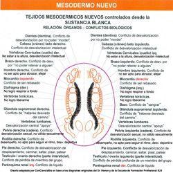 Nueva Medicina Germanica Hamer NMG Leyes Biologicas 5LB Tablas Mesodermo Nuevo Capa Embrionaria