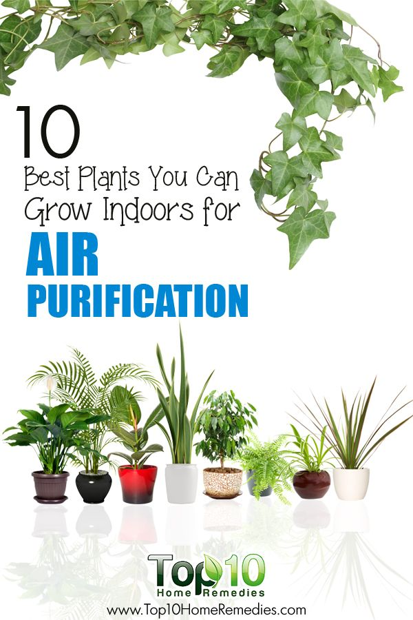 10 best plants you can grow indoors for air purification the o 39 jays blog and conditioning. Black Bedroom Furniture Sets. Home Design Ideas