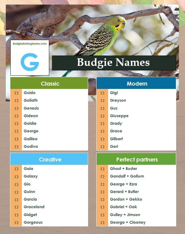 Gee I Love G Bird Names Pet Birds Pet Bird Pets