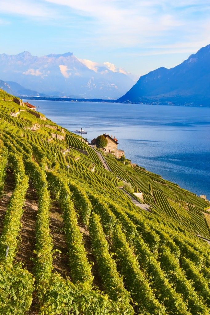 Vineyards of the Lavaux region over Lake Leman