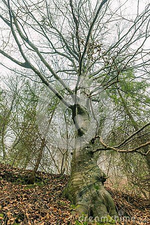 Details of A mysterious looking tree in a foggy forest