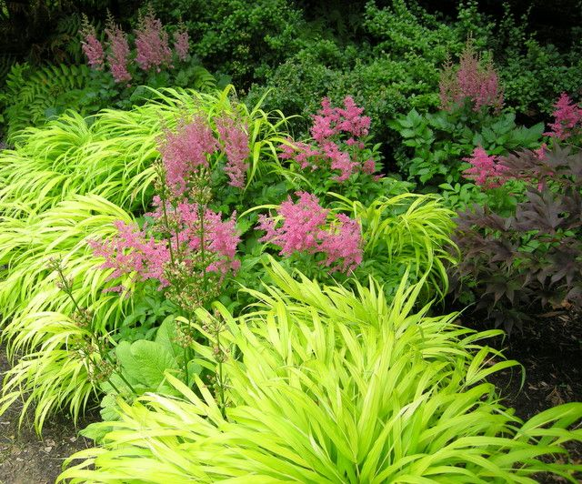 All gold hakone grass w astilbe garden pinterest for Grasses for garden borders