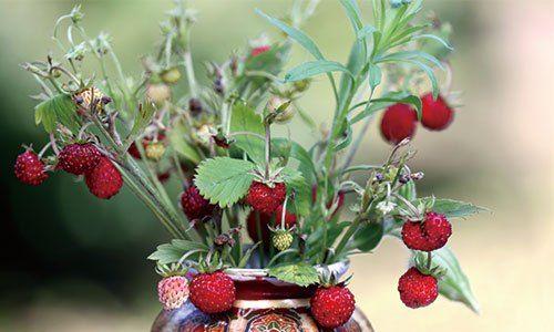 ワイルドストロベリーの育て方・栽培方法 自家菜園で育てる無農薬のハーブ   Timeless Edition