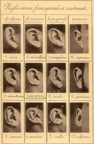 Ear classification ✤ || CHARACTER DESIGN REFERENCES | キャラクターデザイン • Find more at https://www.facebook.com/CharacterDesignReferences if you're looking for: #lineart #art #character #design #illustration #expressions #best #animation #drawing #archive #library #reference #anatomy #traditional #sketch #development #artist #pose #settei #gestures #how #to #tutorial #comics #conceptart #modelsheet #cartoon || ✤