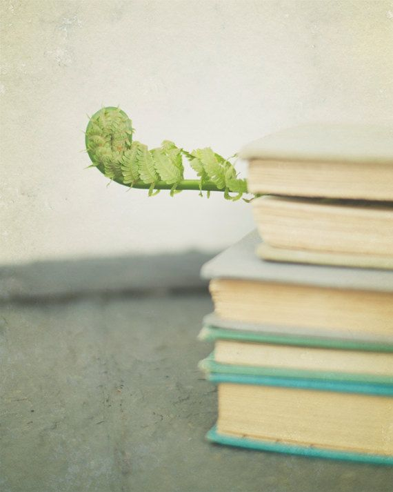 SALE Book Photography, Green and Gray Photo, Still Life Photograph, Library Decor, Fern Picture, Rustic Artwork