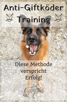 German Shepherd Dog | Poison bait | Dog Training | Impulse control | dogs blog