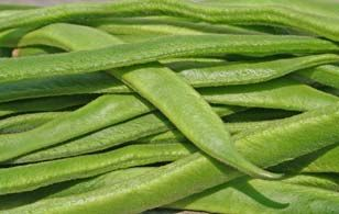 How to Grow Runner Beans – QUICKSTART GUIDE