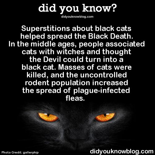 Black cat superstition by didyouknowblog.com on tumblr