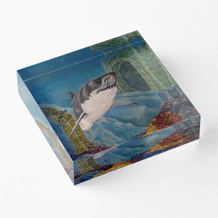 acrylic block, home,office,accessories,decor,items,cool,beautiful,fancy,unique,trendy,artistic,awesome,fahionable,unusual,gifts,presents,for sale,design,ideas,aqua,blue,turquoise,great white,shark,wildlife,ocean,redbubble