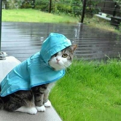 Why Rain Cats And Dogs