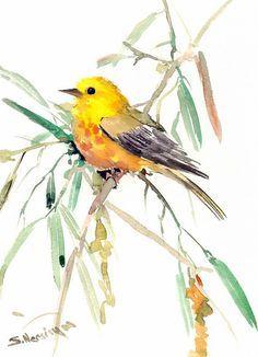Reinita amarilla de pájaro pintura, acuarela original 12 x 9 en