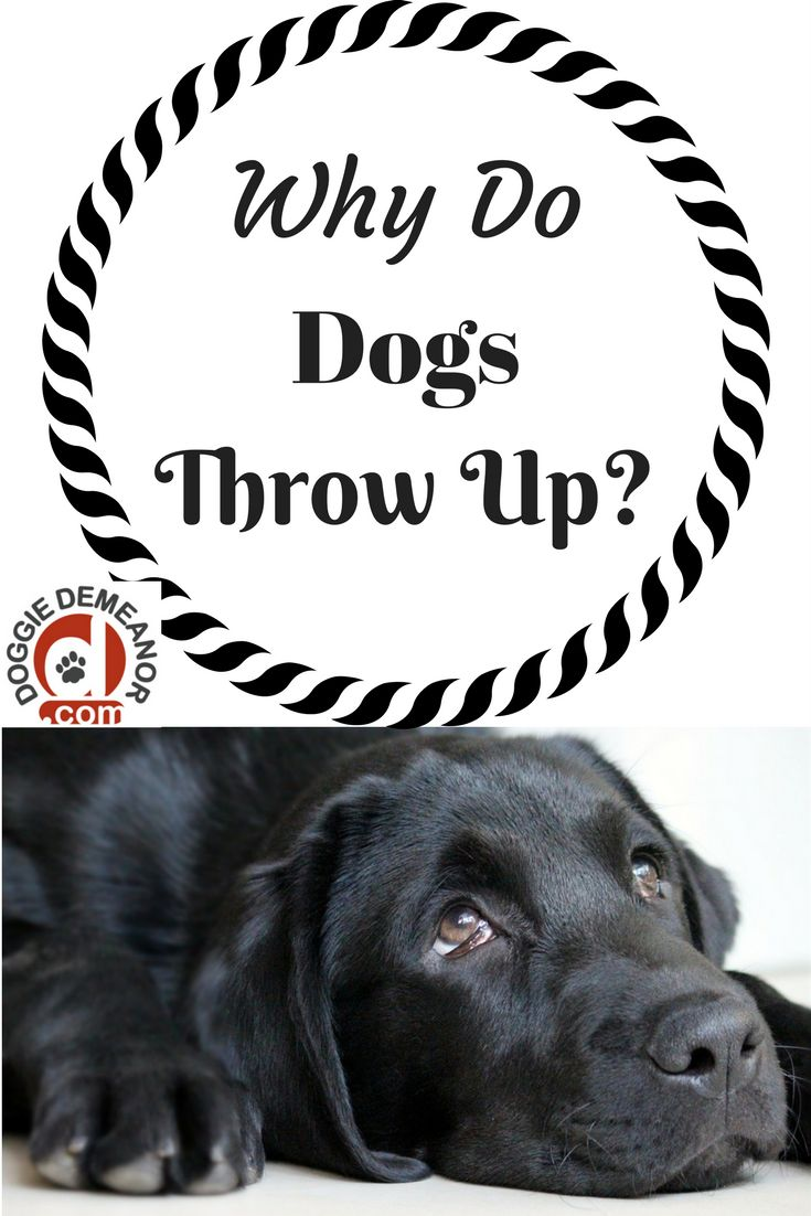 Although not the most pleasant of topics, as a dog owner you will need to know why dogs throw up so you can be prepared when it happens to your dog.