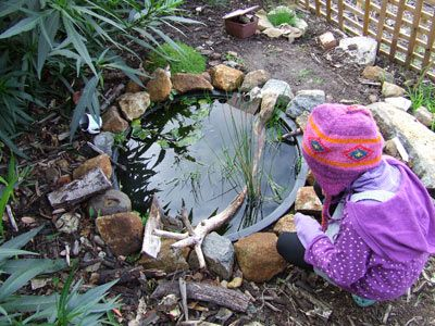 """Garden """"pond"""" at small scale still allows for tadpole ..."""