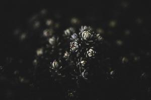 EMILY OBRIEN | https://emilyobrienlifestyle.com    Botanical Mountain Succulent Photographic Print