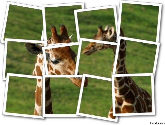 1 photo = 12 photos