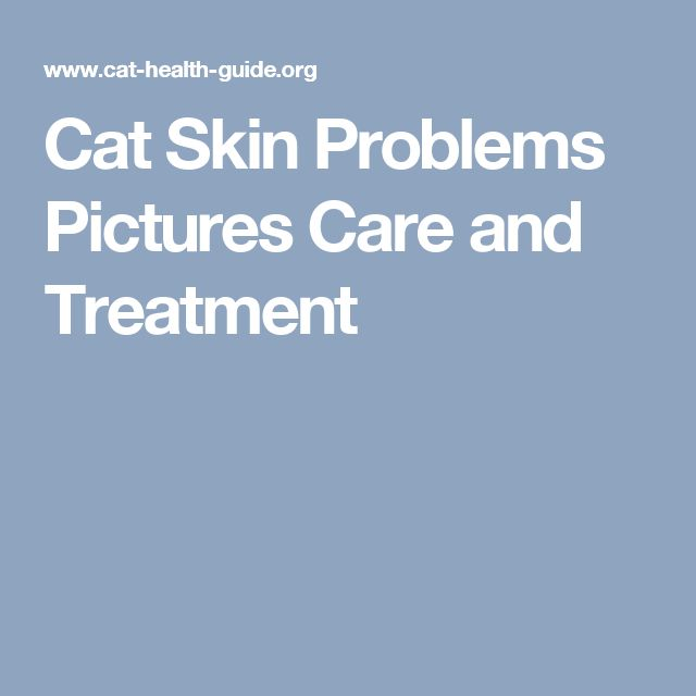 Cat Skin Problems Pictures Care and Treatment