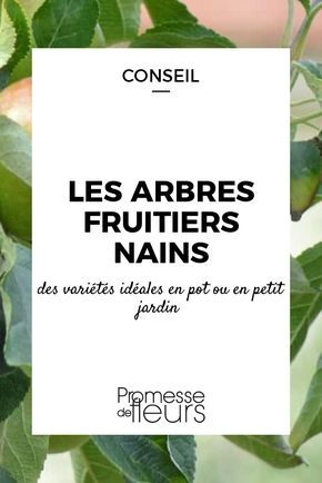 les 25 meilleures id es de la cat gorie arbres en pots sur pinterest fleurs en pots plants d. Black Bedroom Furniture Sets. Home Design Ideas