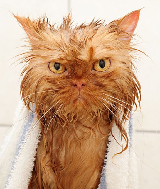 17 Wet Cats Who Will Never Forgive You
