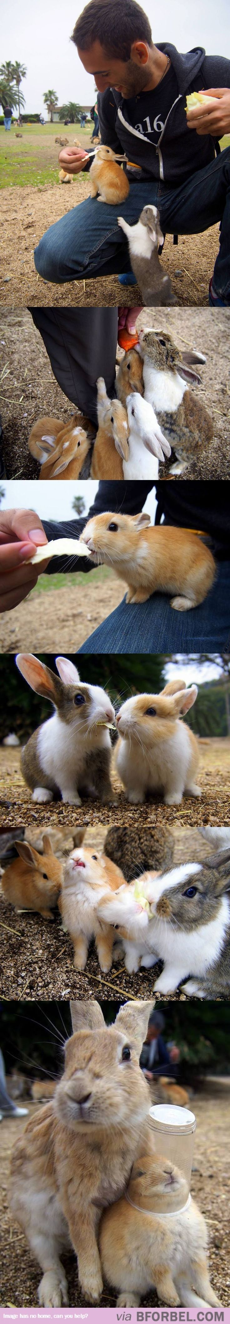6 Of The Cutest Bunny Images You'll See Today…
