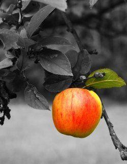 Zwart en wit, tegen kleur. Ik vind dat dit soort foto's een heel mooi effect geven en je kan zelf kiezen welk gedeelte je in kleur wil en wat niet. Ook vraag ik me af waarom de appel gekleurd is, in plaats van de tak en de blaadjes.