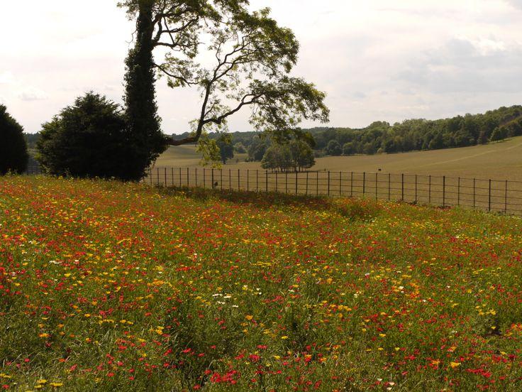 Annual summer meadow