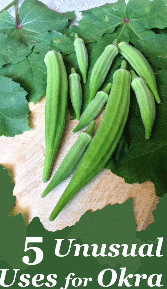 1000 Images About I Love Okra On Pinterest Okra Cherry Tomatoes And Pickling Spices