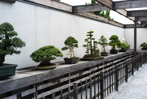 National Bonsai Museum – Washington, D.C. | Atlas Obscura