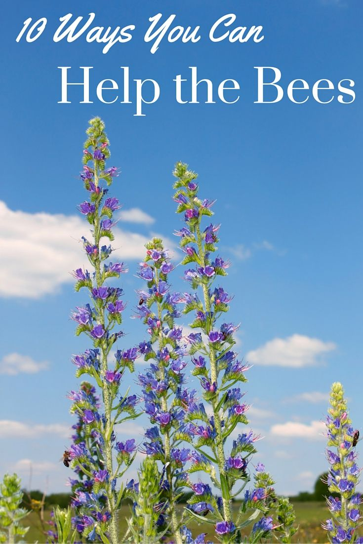 Kindness to Bees: 10 simple and effective ways we can help save the bees. The declining bee populations are a big concern, but luckily, there are many things we can do to help them.