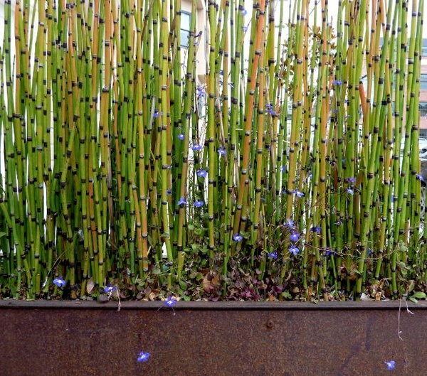 Bamboo hedge in a long planter to prevent it from spreading. Good for the privacy screen. :)