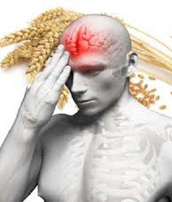 Tarwe producten zijn onevenredig verantwoordelijk voor obesitas, coeliakie en auto immuunziekten en ook zijn de schadelijke gevolgen van tarwe zorgwekkend, meldt de huidige editie van Nutrition Bul…