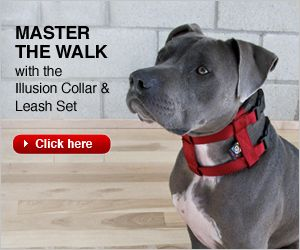 Cesar Millan Dog Training Stop Barking
