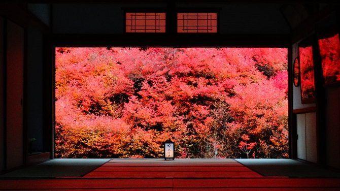 この秋カップルで行きたい【関西】おすすめデートスポット29選!人気の紅葉スポットも @jalannet
