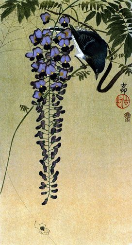 Flycatcher and Wisteria   Japanese Art Print Koson
