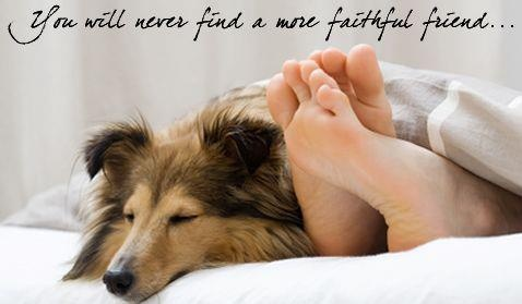 My favorite moments - when my Sheltie, Rosie, sleeps with me on our bed.